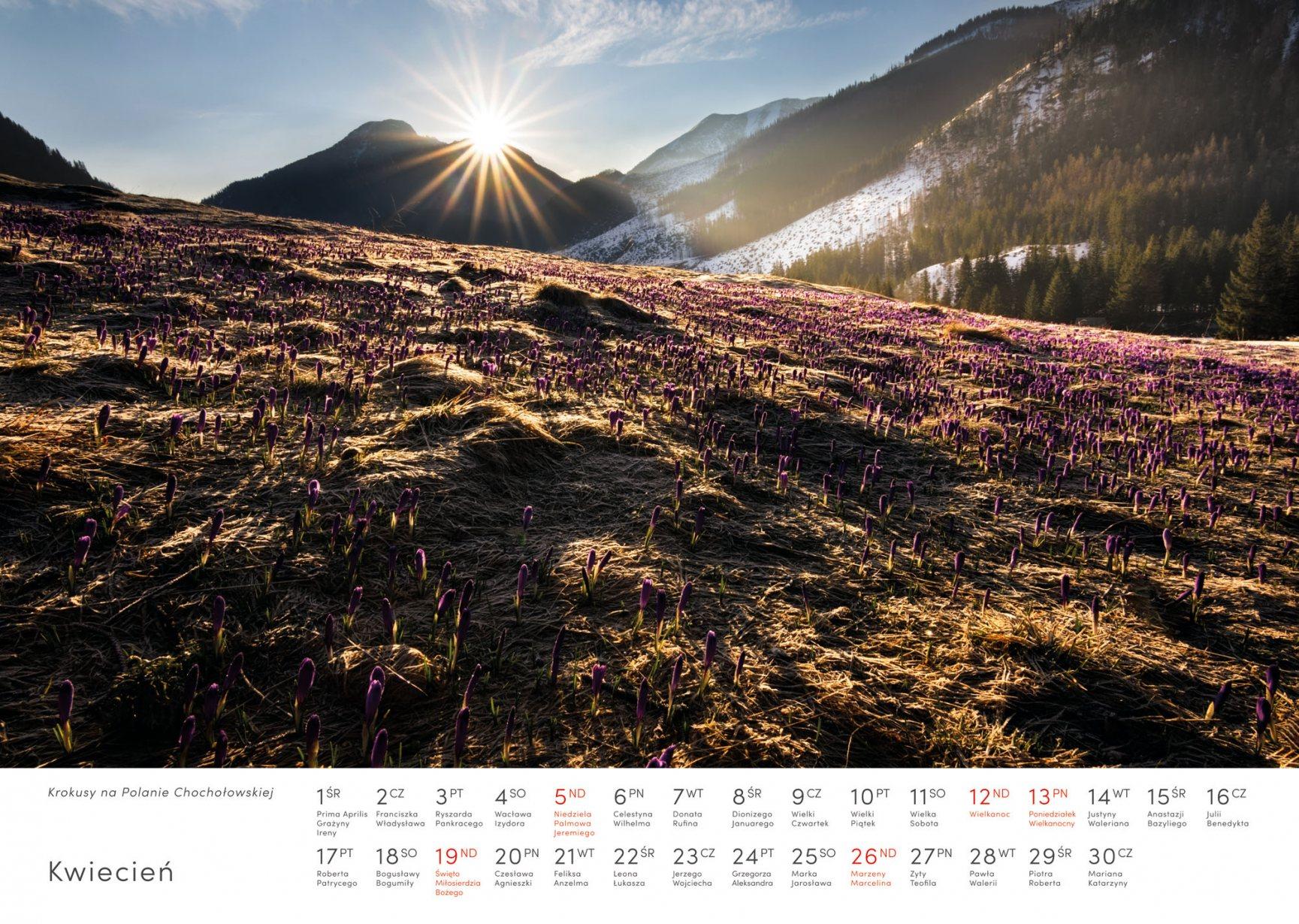 Kalendarz krajobrazy 2020 - Kwiecień - Piotr Kałuża - krokusowa Polana Chochołowska w Tatrach